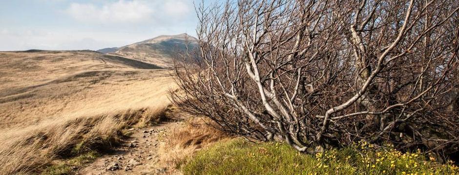 hillside image